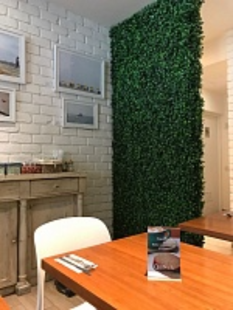 Ficus - IG88024A