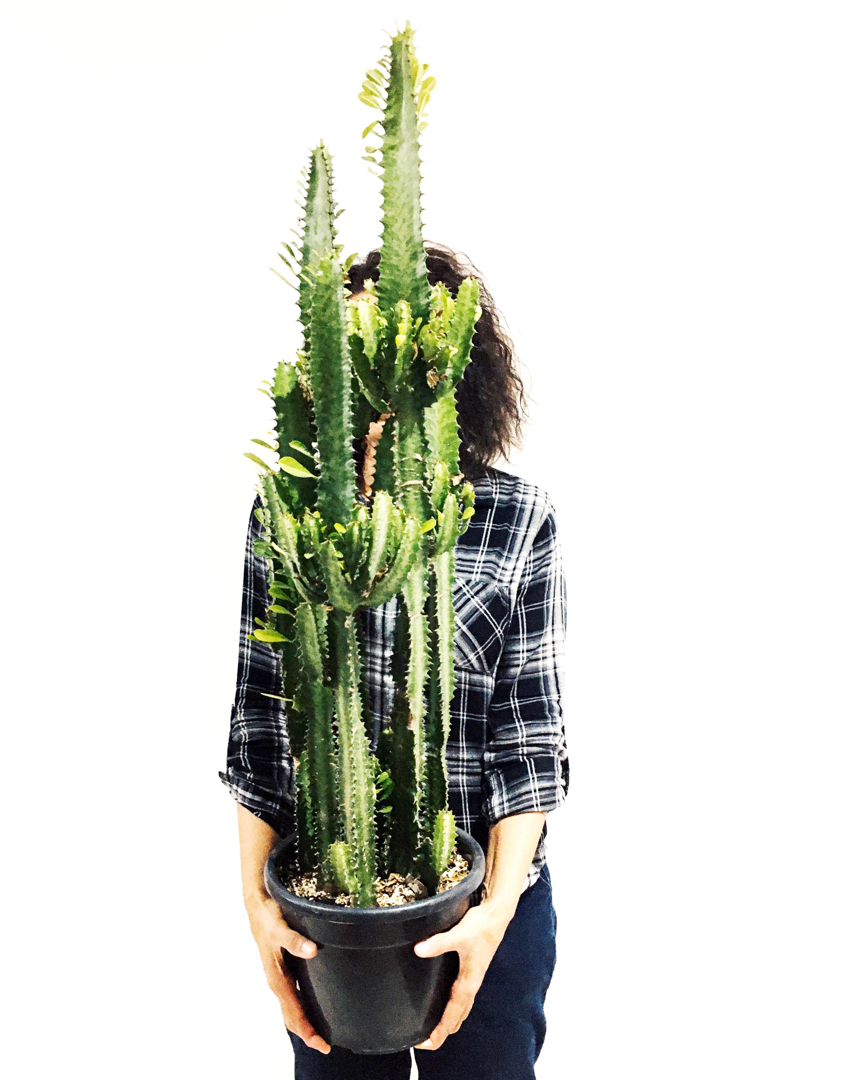 Cactus Catedral
